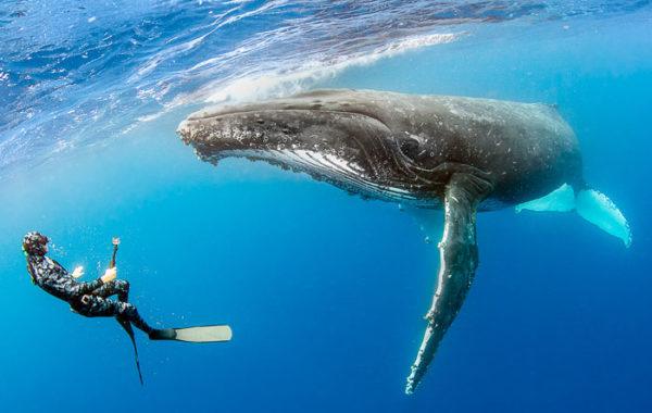 汤加塔布岛四天三晚观鲸