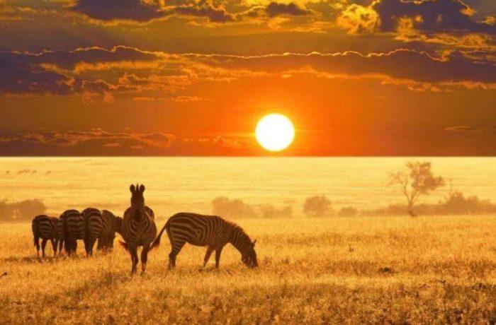 坦桑尼亚 13日顶级游猎之旅