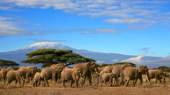 非洲肯尼亚追猎之旅十日游